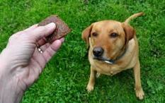 liver treat with dog