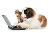 computer dog and cat