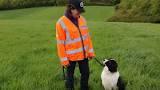 dogs on bbc