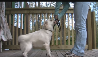 Dogs and Head Halter Leads treats