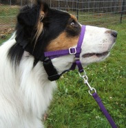 Dogs and Head Halter Leads