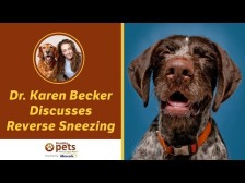 Dr Becker discusses reverse sneezing