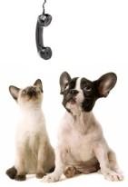 cat & dog on phone