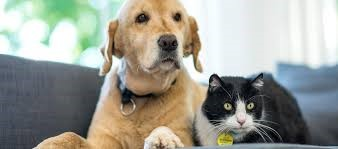 cat and dog for covid July b